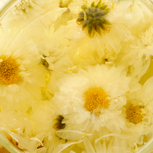 Huang shan Chrysanthemum - Herbal Tea